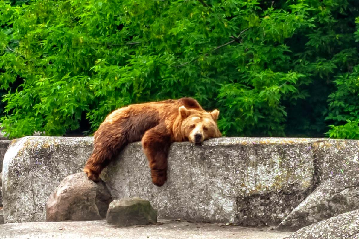 Meet a bear during the Warsaw Praga tour with our private guide